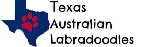 Texas Australian Labradoodles