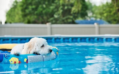 4 Tips to Keep Your Doodle Puppy Safe In and Around Water