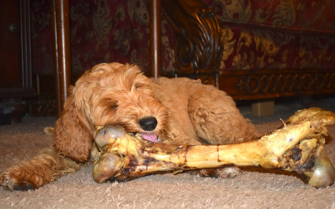 What Are The Best Chew Toys For Australian Labradoodles?