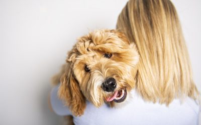 How to Find the Right Labradoodle Breeder