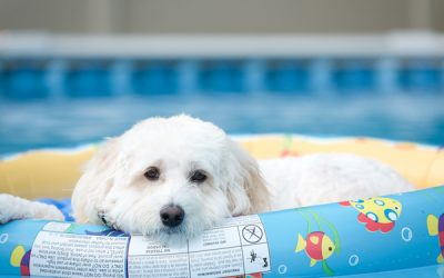 How to Keep Your Labradoodle Cool During the Hottest Months